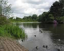 Cuerden Valley Park - Lake
